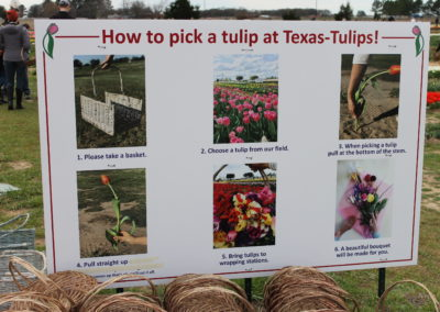 202003_TexasTulips (5.5)